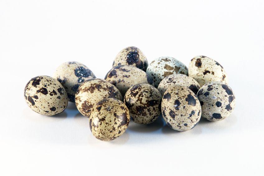 Group of Quail Eggs